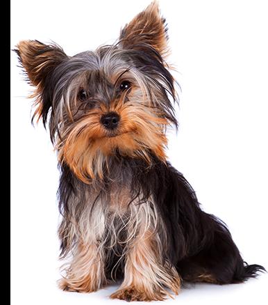 Cachorros - Razas miniaturas y pequeñas