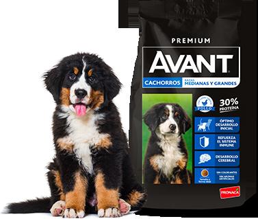Avant - Cachorros - Razas medianas y grandes