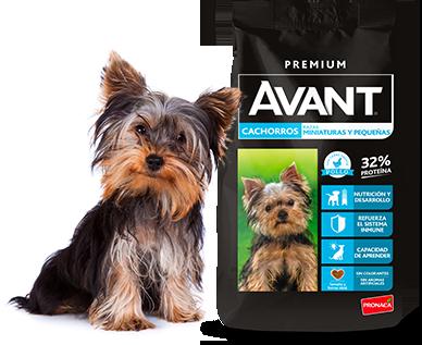 Avant - Cachorros - Razas miniaturas y pequeñas